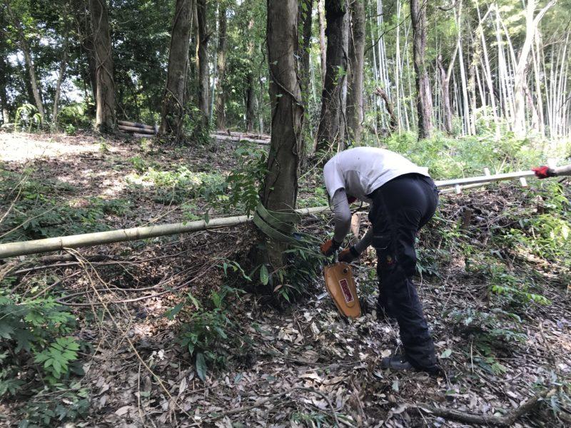 ウインチと木を繋ぐ
